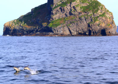 Dolphins-at-Round-Top-Island
