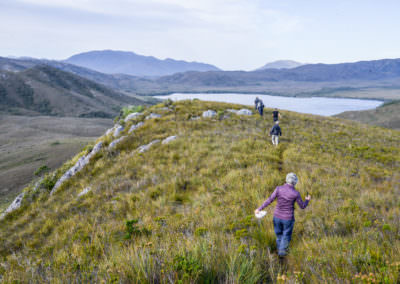 Guests-trek-through-path-in-buttongrass-plains