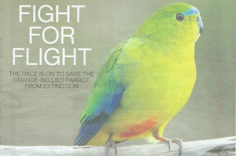 TasWeekend Magazine: Fight for Flight